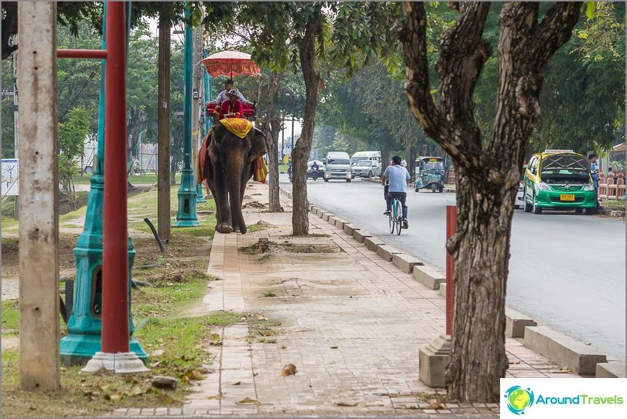 Täällä sinulle tarjotaan pokatushki norsuilla