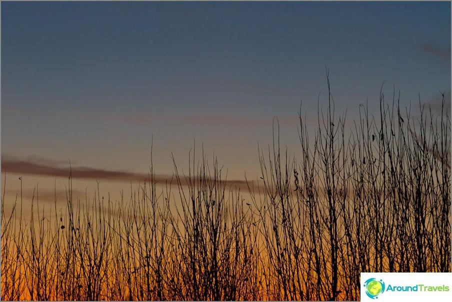 Luonto auringonlaskun aikaan