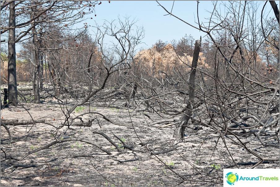 Paloi metsää Spit Long