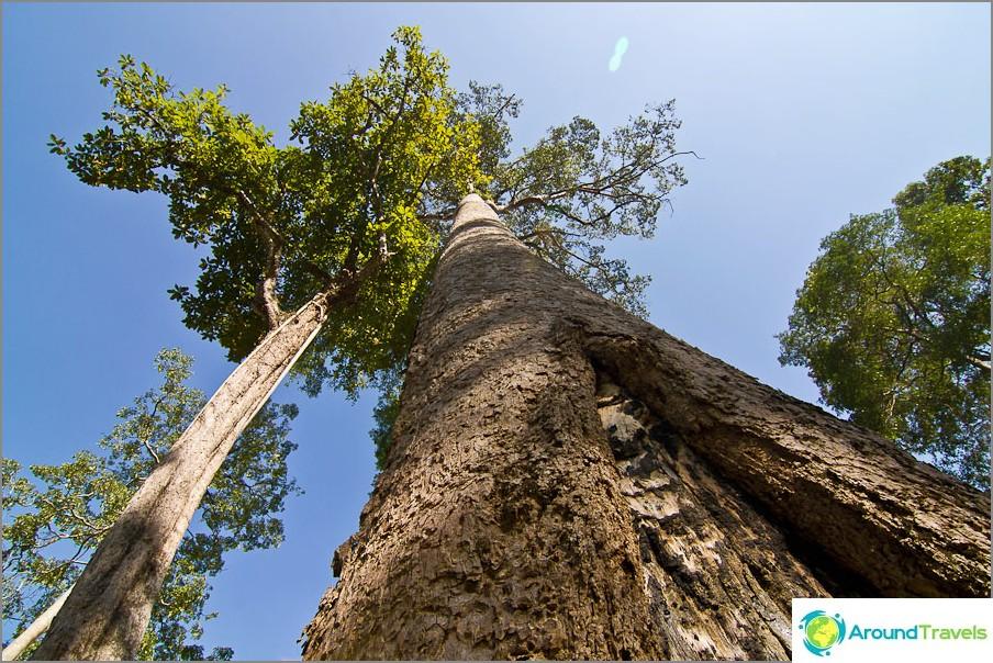 Pitkät puut