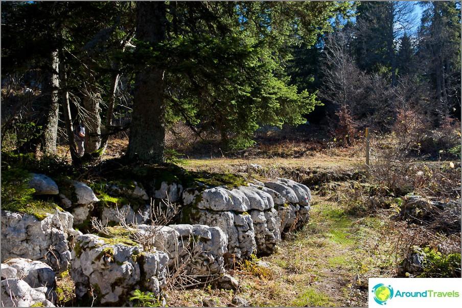 Дърветата растат направо върху камъните