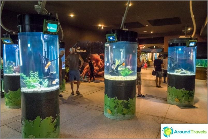 Phuketin akvaario