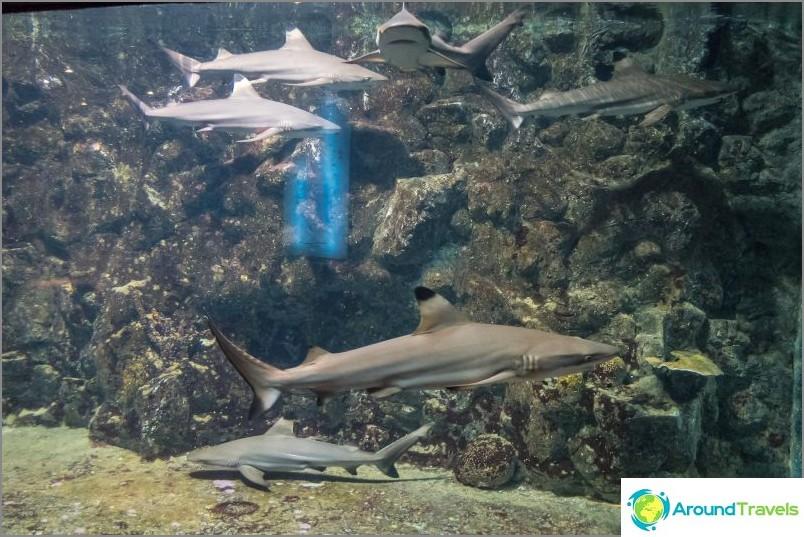 Phuket Oceanarium - joka on melko tylsä akvaario