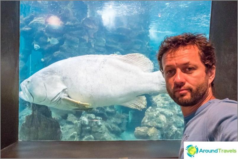 Phuketin akvaario, sisäkuva