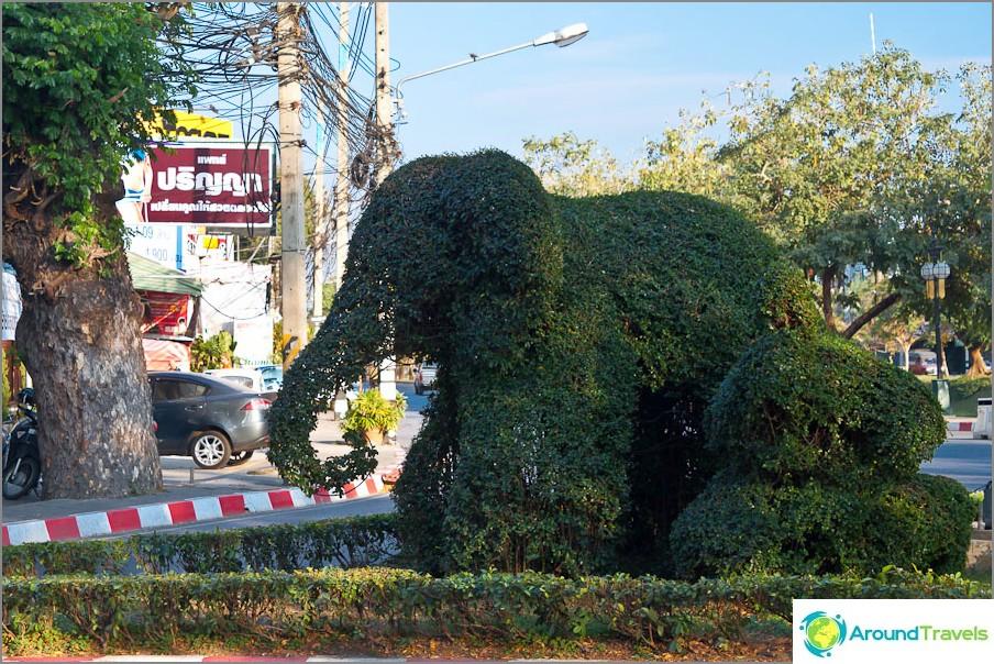 Растителен слон
