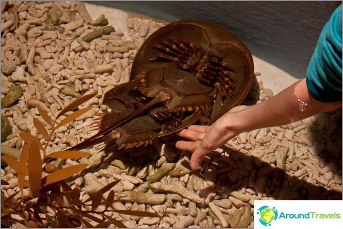 Erityisessä akvaariossa voit koskettaa parittavia eläimiä