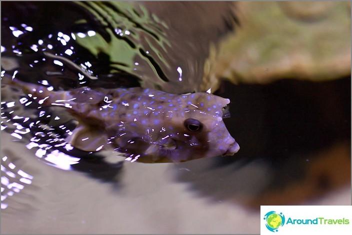 Hauska kala silmällään