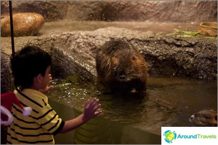 Eläimet Oceanariumissa voivat olla erilaisia