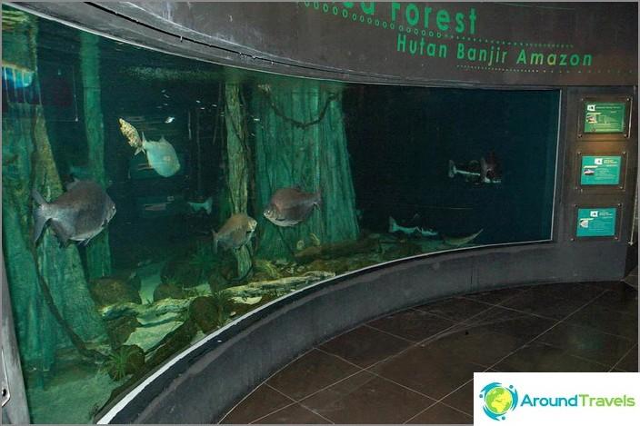 Yksi Oceanariumin suurista akvaarioista