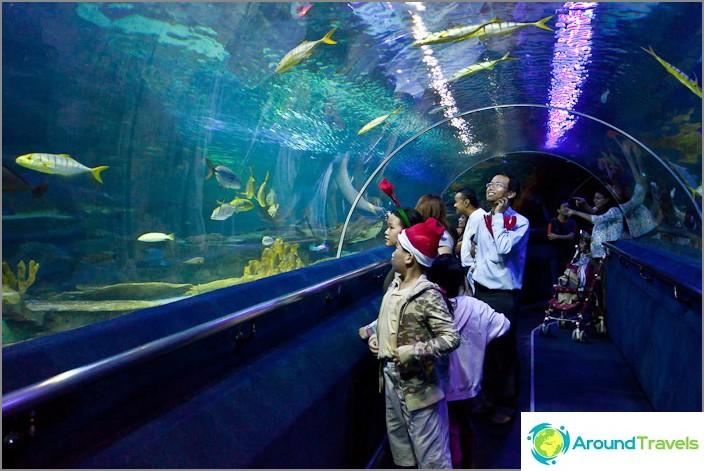 Tunneli Kuala Lumpurin Oceanariumissa