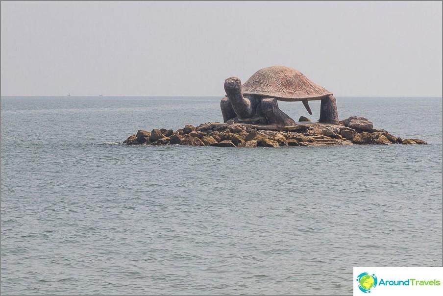 Saari kilpikonna