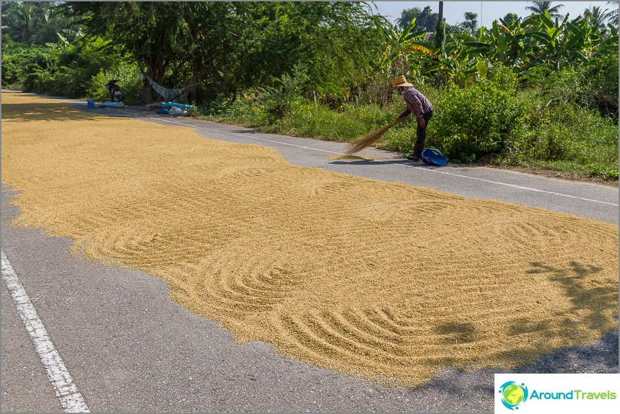 Näin riisi kuivataan aivan jalkakäytävälle