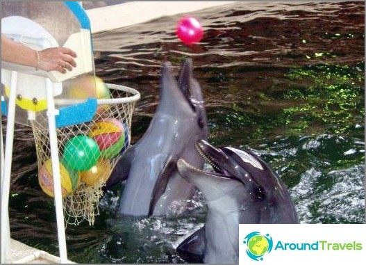 Biostation - delfiinit