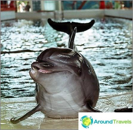 Biostation - delfiini